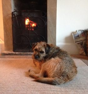 Its hard to tear myself away from this lovely warm fire but I must check what my well behaved owner are up to?